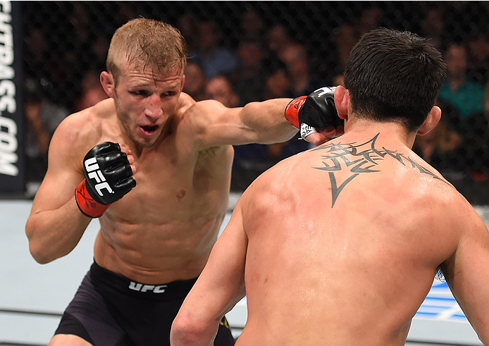 BOSTON, MA - JANUARY 17:  (L-R) TJ Dillashaw punches Dominick Cruz in their UFC bantamweight championship bout during the UFC Fight Night event inside TD Garden on January 17, 2016 in Boston, Massachusetts. (Photo by Jeff Bottari/Zuffa LLC/Zuffa LLC via G